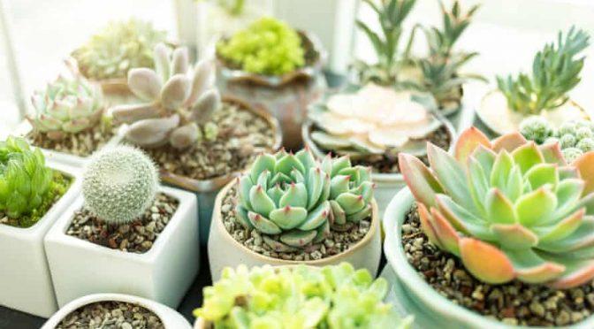 Indoor Plants, The New Trend